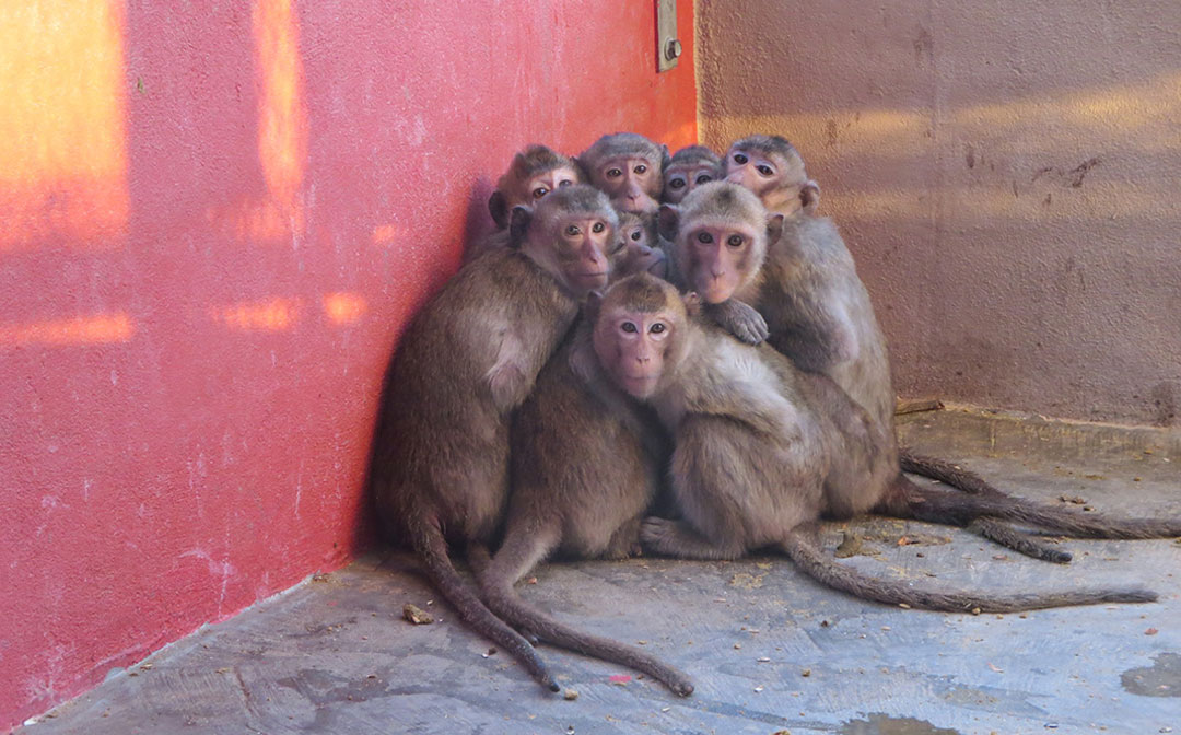 NIH Child Abuse Experiments on Baby Monkeys Exposed