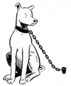 dog-chain
