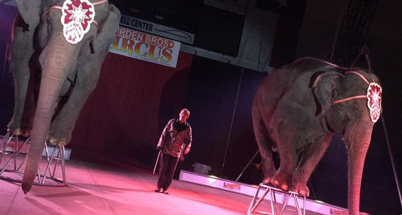 Garden Family Circuses Animal Rights Foundation Of Florida