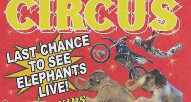 Last Chance To See Elephants Don 39 T Believe The Circus
